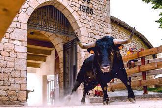 'Jabato' se alza con el Primer Premio del 11º Concurso de Fotografía Taurina de ToroAlcarria