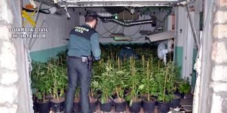 La Guardia Civil detiene a una persona en Fuentenovilla por cultivar 1.027 plantas de marihuana