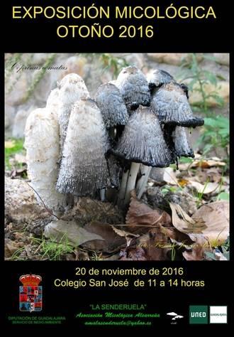 Exposición micológica el domingo 20 en el San José