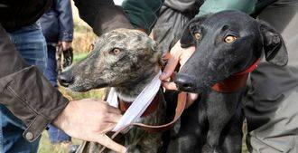 La Guardia Civil detiene a una persona por maltrato animal a una perra galga