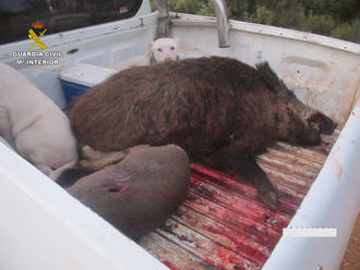La Guardia Civil pilla a 4 cazadores furtivos decomisándoles un jabalí y un corzo muertos