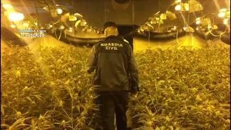 La Guardia Civil detiene a un grupo de ciudadanos chinos que cultivaban más de 12.000 plantas de marihuana