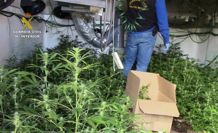Tres detenidos e intervenidas más de 1.200 plantas de marihuana