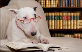 Tres colegios de Albacete incorporan un programa con perros para