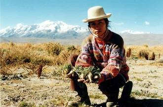 Maca andina, el mejor aliado para potenciar el deseo sexual