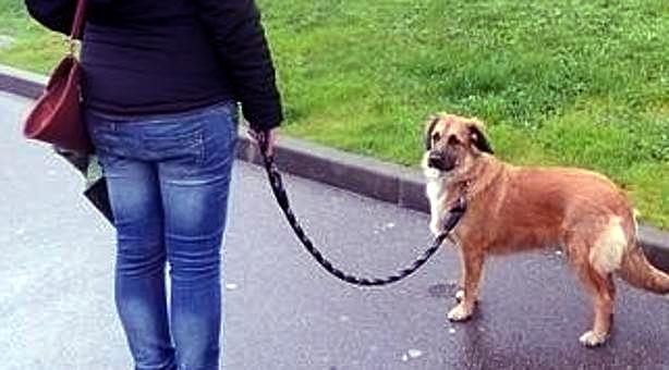 La campaña de control de propietarios de animales se salda con las primeras denuncias