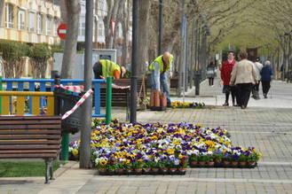 Más de 4.000 flores y casi 500 metros cuadrados de césped para arrancar la campaña de plantación de primavera en Azuqueca