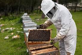 El apicultor de la comarca de Molina, Miguel Ángel Casado lidera el movimiento Serranía Celtibérica