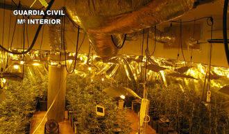 La Guardia Civil incauta 773 plantas de marihuana en un chalet de Chiloeches
