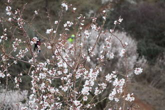 Sigue el tiempo primaveral este viernes soleado en Guadalajara donde el mercurio llegará a los ¡25ºC!