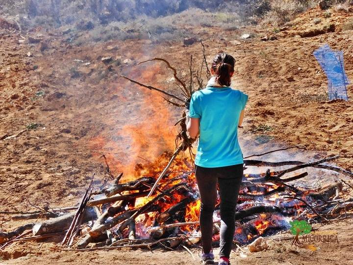 Yebes busca voluntarios para destruir las plantas de ailanto que han invadido el bosque de Valdenazar