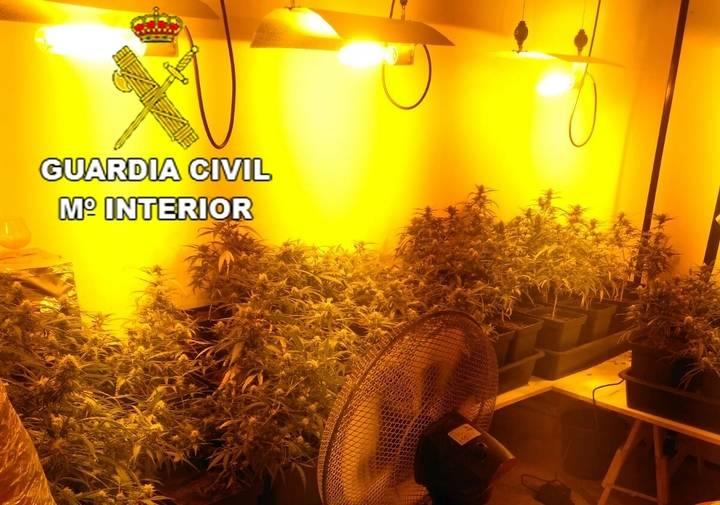 La Guardia Civil detiene a una persona e investiga a otra por cultivar 1.318 plantas de marihuana en Pioz