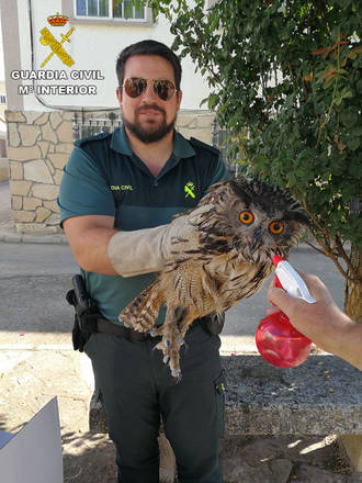 La Guardia Civil recupera un búho real en la plaza de Sacecorbo