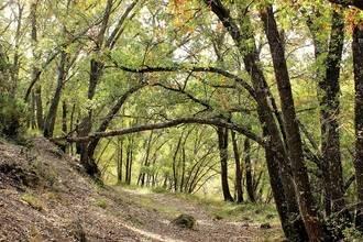 Este sábado Valdenazar descubrirá a los visitantes sus méritos en el I Premio Regional de Medio Ambiente