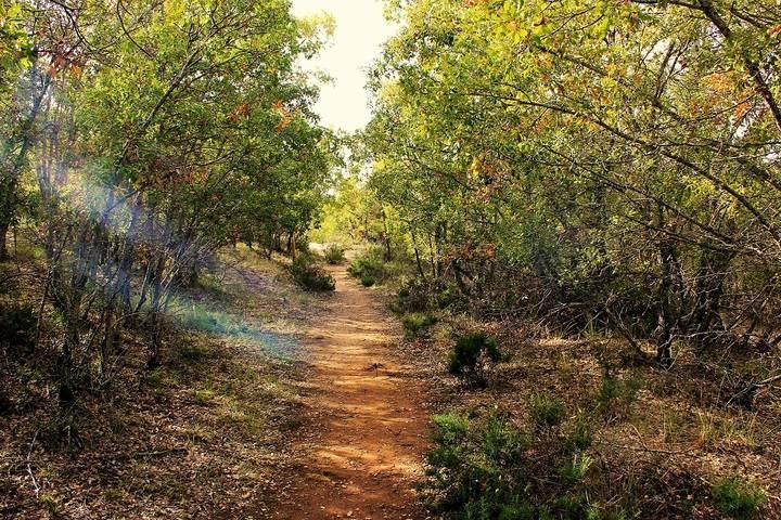 Yebes invita a descubrir en dos jornadas los secretos del bosque de Valdenazar