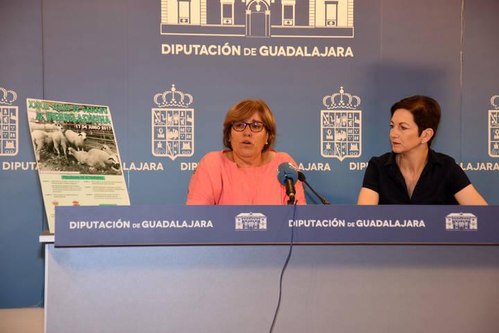 Hiendelaencina celebrará el próximo sábado la XXXIII Feria del Ganado