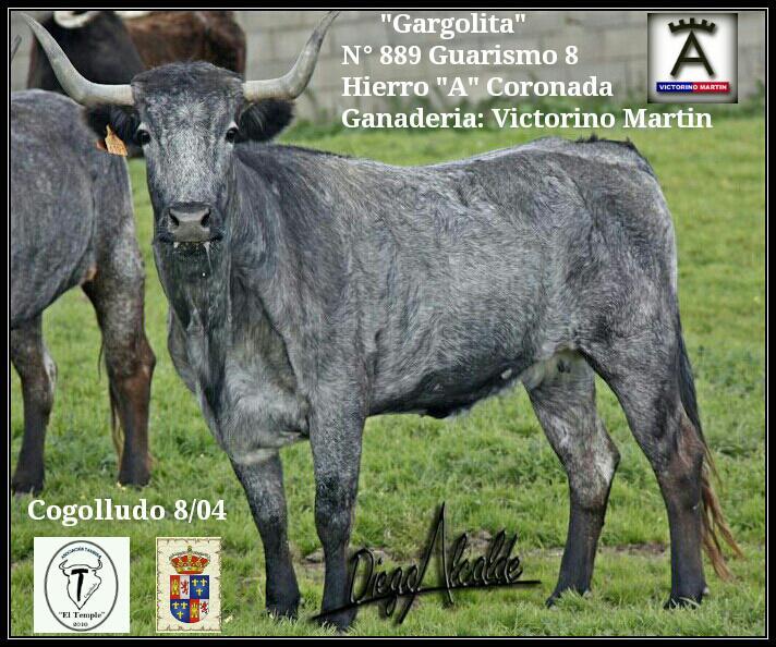 'Gargolita' será este sábado la II Vaca Enmaromada de Cogolludo