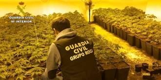 Dos detenidos por cultivar 1.424 plantas de marihuana en Albalate de Zorita