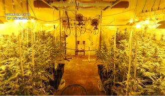 Detienen a un hombre de 70 años que cultivaba 735 plantas de marihuana en un polígono de Toledo