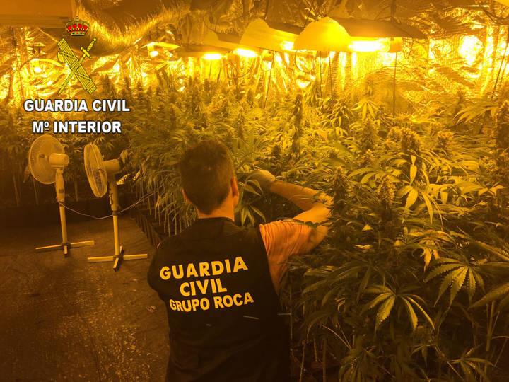La Guardia Civil detiene a tres personas por cultivar marihuana en Yebes