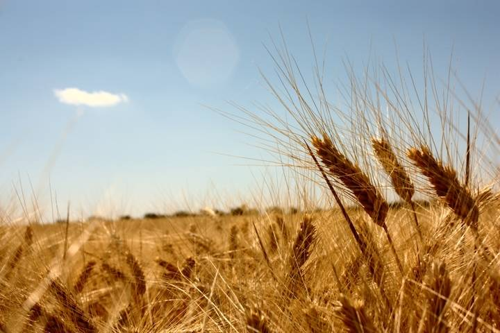 La sequía está destrozando la cosecha en la provincia de Guadalajara