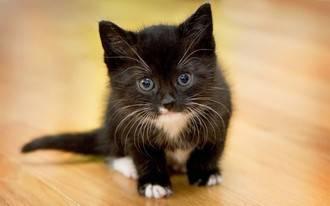 Grabarse maltratando a un gato y colgarlo en redes sociales le cuesta caro a un menor en Horche