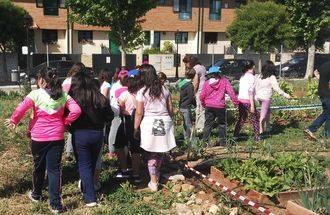 Escolares de Alovera visitaron los huertos de la escuela ecológica