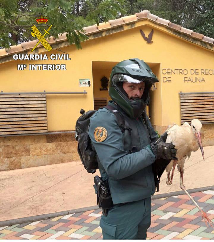 La Guardia Civil recupera una cigüeña blanca en Cabanillas del Campo