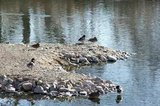 Becas de prácticas para estudiantes de Ciencias Ambientales en la Reserva Ornitológica de Azuqueca