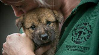 Rescatados 149 cachorros de perro de morir electrocutados para hacer sopa picante