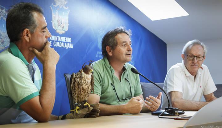 El ayuntamiento de Guadalajara se ayuda de halcones para controlar la proliferación de palomas