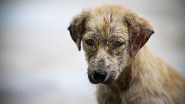 La Guardia Civil investiga a una persona por maltrato animal en Marchamalo