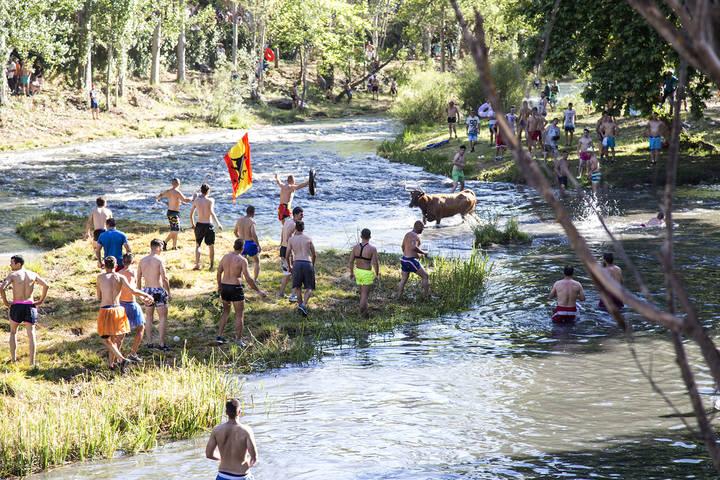 Las 'Vacas por el Tajo' atraen a unas 8.000 personas a Trillo