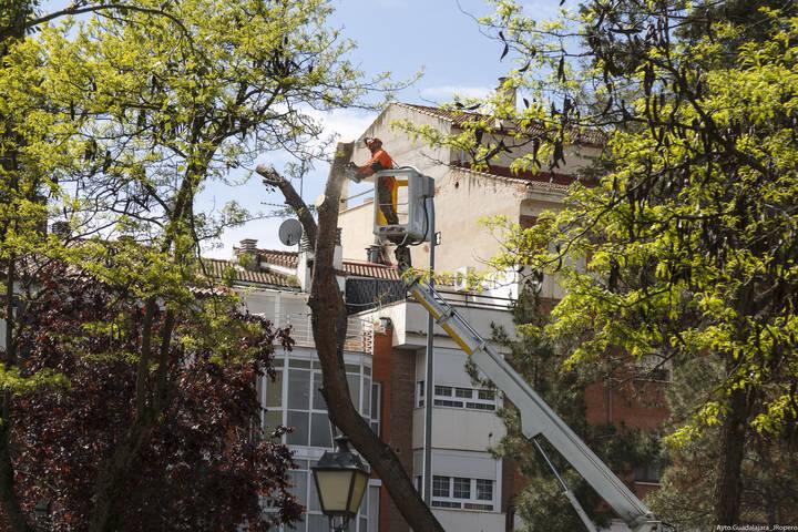 Ya ha empezado el plan de podas del arbolado en Guadalajara