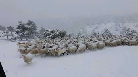 La nieve obliga a suspender varias misas en algunos pueblos de la provincia de Guadalajara