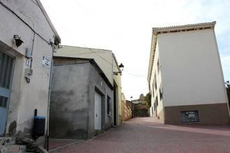 Yebes volverá a tener un olmo en el casco urbano, esta vez resistente a la grafiosis