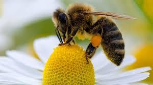 Los robos y la sequía están acabando con la producción de miel en la provincia de Cuenca