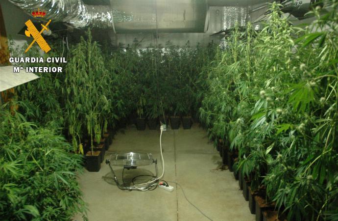Gracias a un perro detector de drogas consiguen desmantelar dos laboratorios de marihuana en Toledo