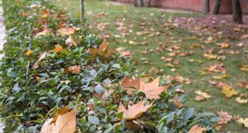 Se intensifican las labores de retirada de hojas y ramas en las vías públicas y en parques y jardines
