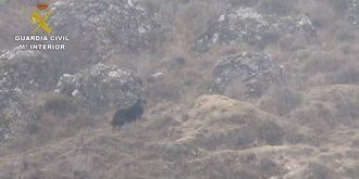 El avistamiento de un gran perro negro en el término de Jadraque comienza a desvanecer la teoría de la pantera de la Sierra
