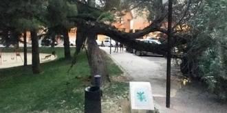 Los fuertes vientos no hacen gran mella en las calles de Guadalajara
