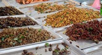 Carrefour pone a la venta en sus lineales alimentos fabricados con