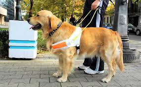Castilla La Macnha tendrá un registro de perros que acompañan a personas con discapacidad