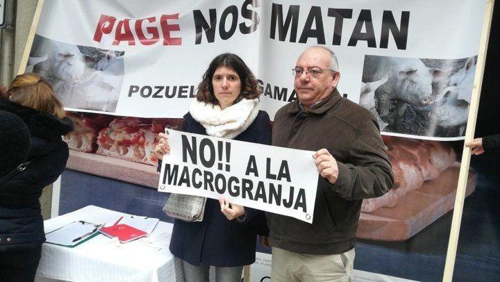 Recogen más de 4.500 firmas contra las macrogranjas de cerdos en Pozuelo y Argamasón
