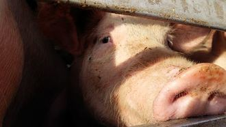 Recogen más de 2.500 firmas contra la macrogranja de cerdos en Luzón