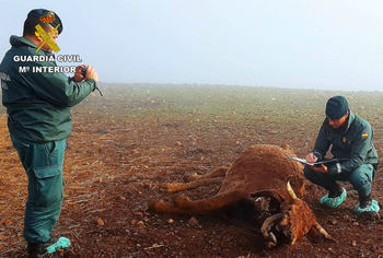 Investigan a un ganadero de Ciudad Real por dejar morir de hambre a sus animales