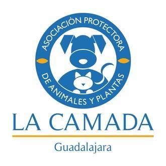 """La Camada está desbordada porque al albergue """"llegan perros y gatos que no son de Guadalajara"""""""