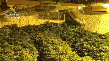La Guardia Civil detiene a tres personas por cultivar 703 plantas de marihuana en Albalate de Zorita