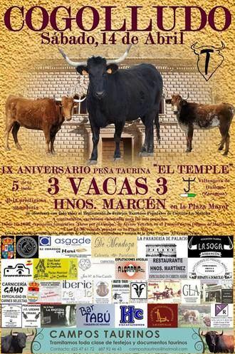 Suelta de vacas en Cogolludo por el IX Aniversario de la Asociación Taurina 'El Temple'