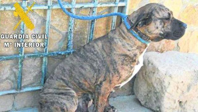 La Guardia Civil inicia en Guadalajara una campaña de vigilancia de perros potencialmente peligrosos